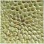 Tile - Inverted Petals - Honey